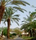 Kibbutz Yotvata